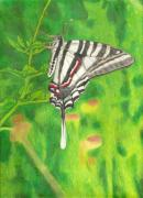 Fern Drawings - Zebra Swallowtail by Courtney Trimble