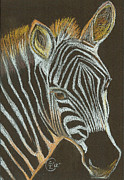 Zebra Pastels - Zebra Yearling by Stephanie L Carr