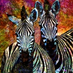 Black And White Digital Art Posters - Zebras Poster by Barbara Berney