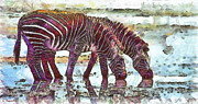 Water Reflections Drawings - Zebras by George Rossidis