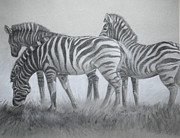 Zebra Pastels - Zebras in the Mist by Flo Hayes