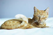 Sitting Photos - Zen Kitty by Cindy Loughridge