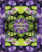 Mandalas Prints - Zen Lilies Print by Bell And Todd