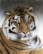 Tiger Painting Framed Prints - Zen Framed Print by Sandi Baker