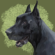 Zeus Digital Art - Zeus the Great Dane by Shandy Huff