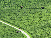 Photography.  Prints - Zig-zag In Vineyards Print by Ursula Sander