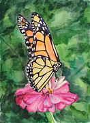 Judy Loper Prints - Zinnia and Monarch Print by Judy Loper