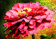 Pink Zinnias Framed Prints - Zinnia Blast Framed Print by Rich Franco