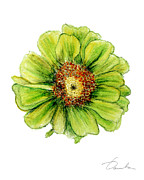 Green Foliage Drawings Prints - Zinnia Print by Danuta Bennett