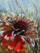 Flora Posters - Zinnia in Its Autumn Poster by Shirley Sirois