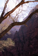 Virgin River Prints - Zion. 5 Minutes Before Spring Print by Viktor Savchenko