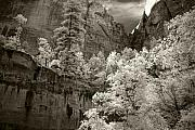 Southwest Landscape Art - Zion by Mike Irwin
