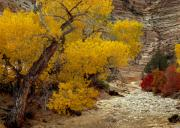 Yellow And Red Prints - Zion National Park Autumn Print by Leland Howard