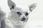 Artography Metal Prints - Zipper the Chihuahua Metal Print by Jayne Logan Intveld