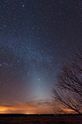 Bare Trees Prints - Zodiacal Light And Milky Way Print by John Davis