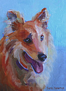 Collie Painting Framed Prints - Zoe Framed Print by Sara Newton