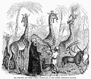 Turban Framed Prints - Zoological Gardens, 1843 Framed Print by Granger
