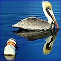 Blues Pelican by Karen Wiles
