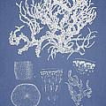 Eucheuma Spinosum Print by Aged Pixel