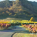 The Hills Of Clos La Chance Winery by Artist and Photographer Laura Wrede