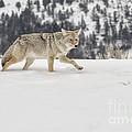 Winter's Determination by Sandra Bronstein