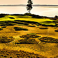 #15 At Chambers Bay Golf Course - Location Of The 2015 U.s. Open Tournament by David Patterson
