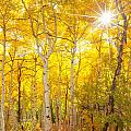 Aspen Morning by Darren  White