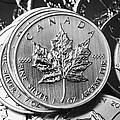 Canadian One Ounce Maple Leaf Silver Coins by Joe Fox