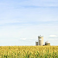Corn field with silos Print by Elena Elisseeva