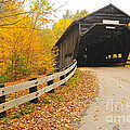Covered Bridge Print by Catherine Reusch  Daley