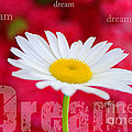 Dream by Darren Fisher