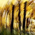 Fall Abstract by Steven Ralser