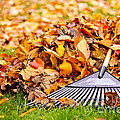 Fall leaves with rake Poster by Elena Elisseeva