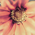 Flower Beauty II by Marco Oliveira