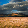 Landscape Of Windy Wheat Field In Front Of Mountain Range With D by Matthew Gibson