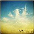 Lonely Seagull by Setsiri Silapasuwanchai