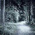 Path In Dark Forest by Elena Elisseeva