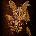 Portrait of a tramp ...