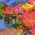 Rose 208 by Pamela Cooper