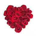 Rose heart Print by Elena Elisseeva