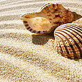 Seashell And Conch by Carlos Caetano