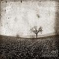 Solitary Tree In Limagne Landscape. Auvergne. France by Bernard Jaubert