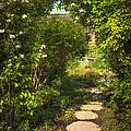 Summer Garden And Path by Elena Elisseeva