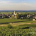 Vineyard And Village Of Pommard. Cote D'or. Route Des Grands Crus. Burgundy. France. Europe by Bernard Jaubert
