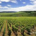 Vineyard Of Cotes De Beaune. Cote D'or. Burgundy. France. Europe by Bernard Jaubert