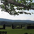 Vineyards In Va - 12125 by DC Photographer