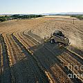 Wheat Harvest In Provence by Sami Sarkis