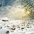 Winter by Jelena Jovanovic