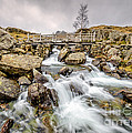 Winter Rapids by Adrian Evans