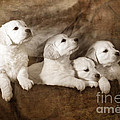 Vintage Festive Puppies by Angel  Tarantella